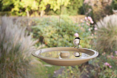 Vogelbadje in de lente