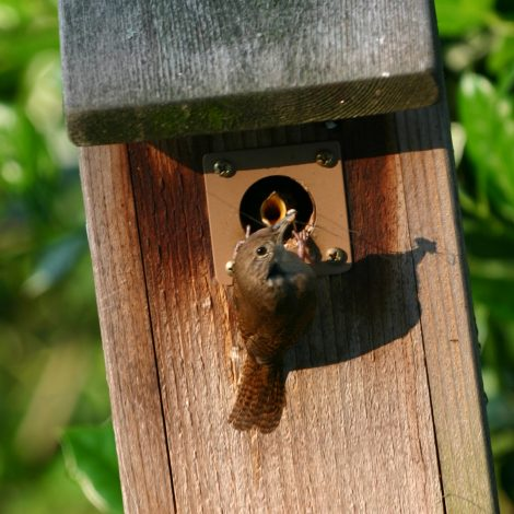 Vogelhuisje met vogel die jongen voert en beschermplaatje rond opening