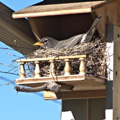 Grappig open vogelhuisje met balkon