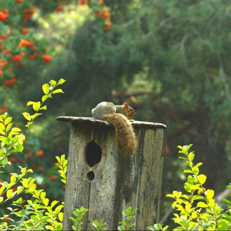 Eekhoorn op een vogelhuisje